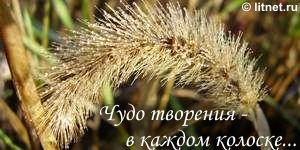 Чудо творения - в каждом колоске... (© litnet.ru)